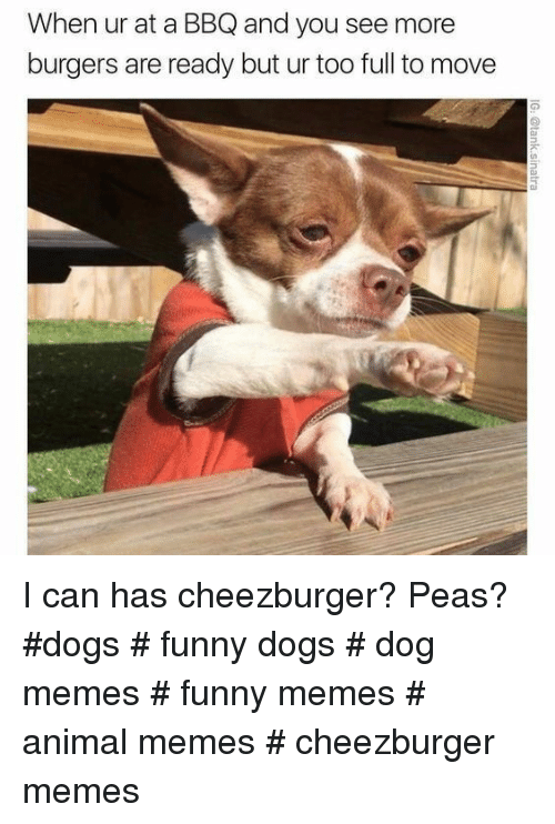 cheezburger: When ur at a BBQ and you see more  burgers are ready but ur too full to move I can has cheezburger? Peas? #dogs # funny dogs # dog memes # funny memes # animal memes # cheezburger memes