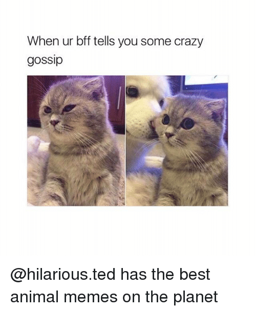 Best Animal Memes: When ur bff tells you some crazy  gossip @hilarious.ted has the best animal memes on the planet
