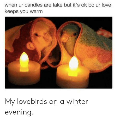 Candles: when ur candles are fake but it's ok bc ur love  keeps you warm My lovebirds on a winter evening.