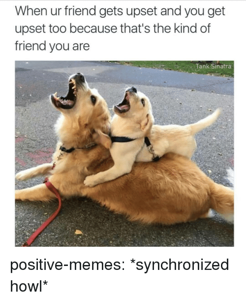 Memes, Tumblr, and Blog: When ur friend gets upset and you get  upset too because that's the kind of  friend you are  Tank Sinatra positive-memes: *synchronized howl*