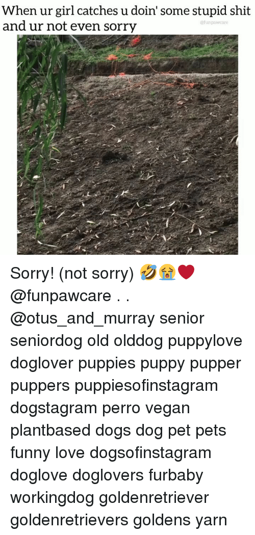 Dogs, Funny, and Love: When ur girl catches u doin' some stupid shit  and ur not even sorry  unpawcare Sorry! (not sorry) 🤣😭❤️ @funpawcare . . @otus_and_murray senior seniordog old olddog puppylove doglover puppies puppy pupper puppers puppiesofinstagram dogstagram perro vegan plantbased dogs dog pet pets funny love dogsofinstagram doglove doglovers furbaby workingdog goldenretriever goldenretrievers goldens yarn