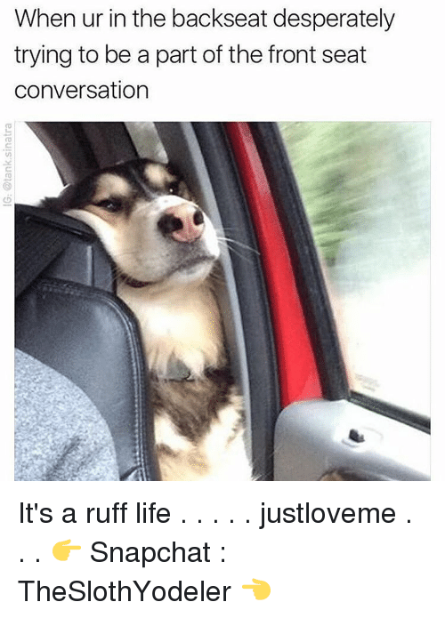 conversate: When ur in the backseat desperately  trying to be a part of the front seat  conversation It's a ruff life . . . . . justloveme . . . 👉 Snapchat : TheSlothYodeler 👈
