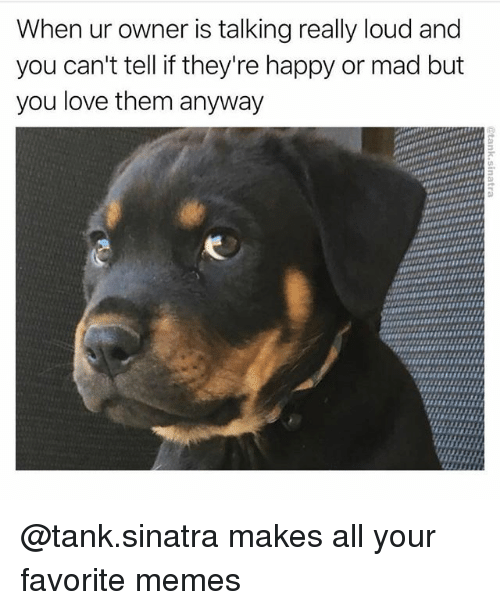 Love, Memes, and Happy: When ur owner is talking really loud and  you can't tell if they're happy or mad but  you love them anyway @tank.sinatra makes all your favorite memes