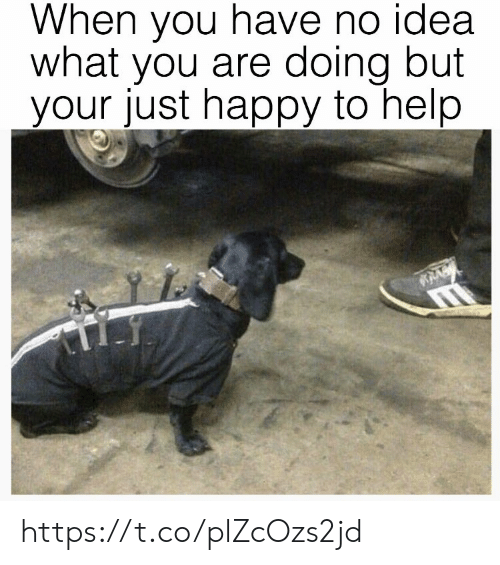 Memes, Happy, and Help: When vou have no idea  what you are doing but  your just happy to help https://t.co/plZcOzs2jd