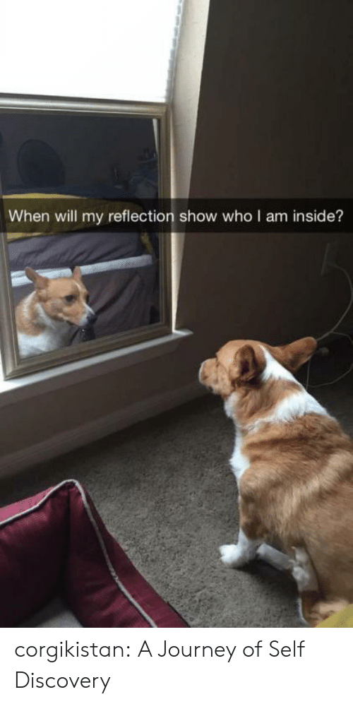 self discovery: When will my reflection show who I am inside? corgikistan:  A Journey of Self Discovery
