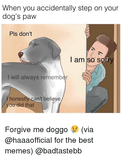 Honestity: When you accidentally step on your  dog's paw  Pls don't  I am so sorr  I will always remember  honest  can't believe  you did that Forgive me doggo 😢 (via @haaaofficial for the best memes) @badtastebb