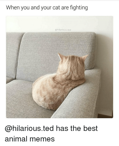 Funny, Ted, and Fight: When you and your cat are fighting  hilarious. ted @hilarious.ted has the best animal memes