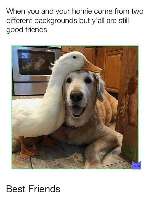 Friends, Homie, and Memes: When you and your homie come from two  different backgrounds but y'all are still  good friends  MEMES Best Friends