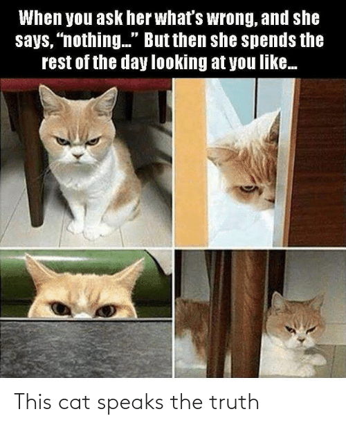 """Says Nothing: When you ask her what's wrong, and she  says, """"nothing."""" But then she spends the  rest of the day looking at you like. This cat speaks the truth"""