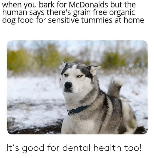 organic: when you bark for McDonalds but the  human says there's grain free organic  dog food for sensitive tummies at home It's good for dental health too!