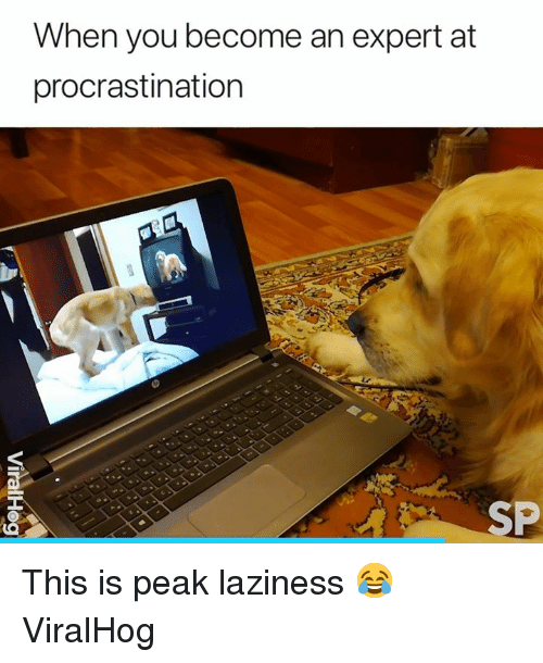 Laziness, Procrastination, and You: When you become an expert at  procrastination  SP This is peak laziness 😂  ViralHog