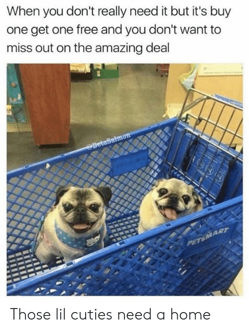 The Amazing: When you don't really need it but it's buy  one get one free and you don't want to  miss out on the amazing deal  BetaSalmon  PET&MART Those lil cuties need a home