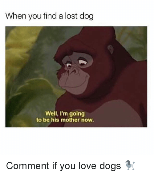 Dogs, Love, and Memes: When you find a lost dog  Well, I'm going  to be his mother now. Comment if you love dogs 🐩