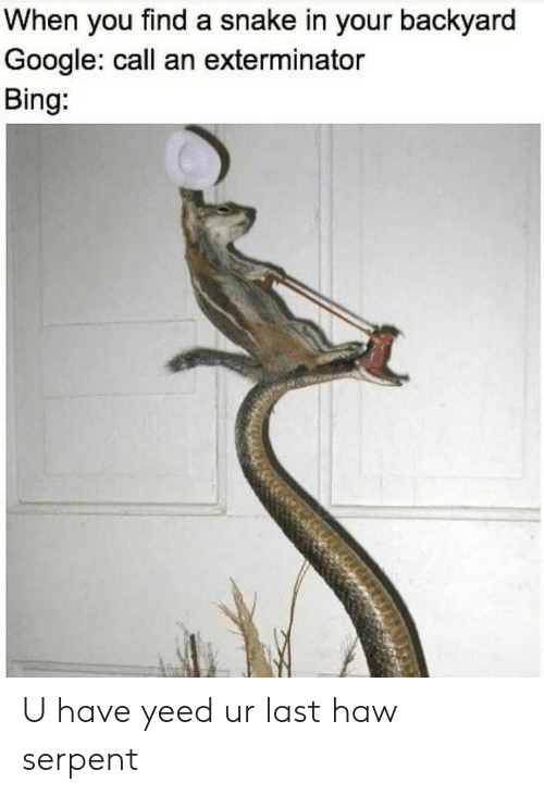haw: When you find a snake in your backyard  Google: call an exterminator  Bing: U have yeed ur last haw serpent