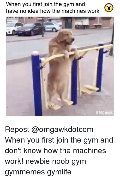 Gym, Memes, and Work: When you first join the gym and  have no idea how the machines work  OMGawk Repost @omgawkdotcom ・・・ When you first join the gym and don't know how the machines work! newbie noob gym gymmemes gymlife