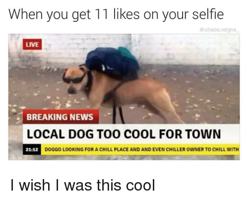 chaos reigns: When you get 11 likes on your selfie  @chaos.reigns  LIVE  BREAKING NEWS  OCAL DOG TO0 COOL FOR TOWN  21-12D  DOGGO LOOKING FOR A CHILL PLACE AND AND EVEN CHILLER OWNER TO CHILL WITH I wish I was this cool