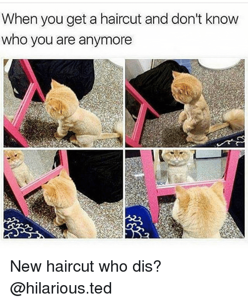Haircut, Ted, and Who Dis: When you get a haircut and don't know  who you are anymore New haircut who dis? @hilarious.ted