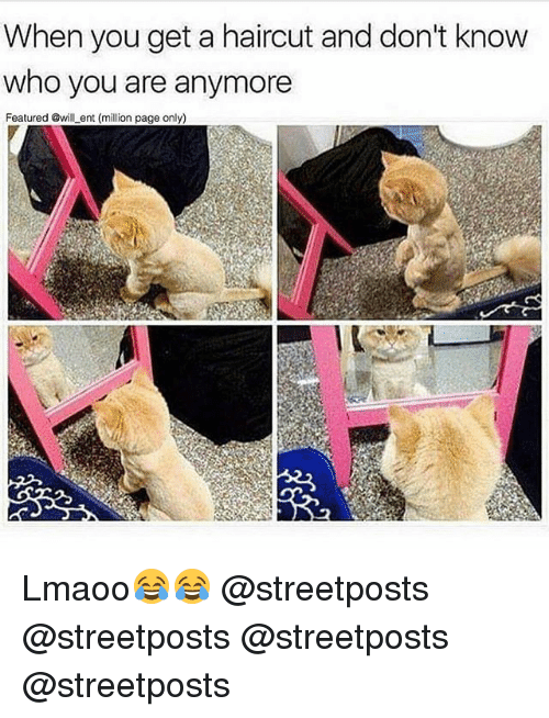 Haircut, Memes, and 🤖: When you get a haircut and don't know  who you are anymore  Featured @will ent (million page only) Lmaoo😂😂 @streetposts @streetposts @streetposts @streetposts