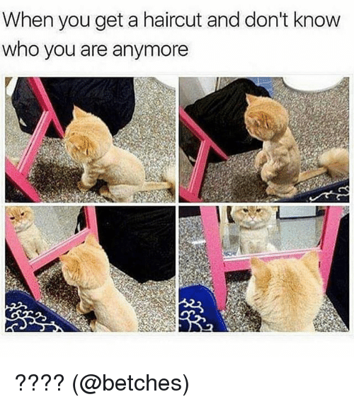 Haircut, Memes, and 🤖: When you get a haircut and don't know  who you are anymoree ???? (@betches)