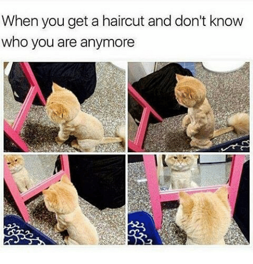 Haircut, Haircuts, and Trendy: When you get a haircut and don't know  who you are anymore