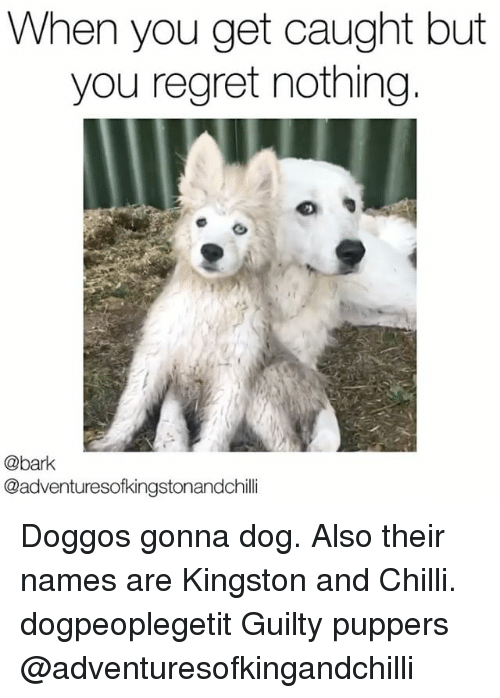 Memes, Regret, and 🤖: When you get caught but  you regret nothing  @bark  @adventuresofkingstonandchilli Doggos gonna dog. Also their names are Kingston and Chilli. dogpeoplegetit Guilty puppers @adventuresofkingandchilli