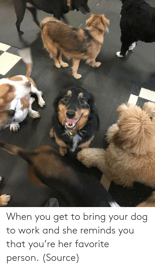 person: When you get to bring your dog to work and she reminds you that you're her favorite person.(Source)