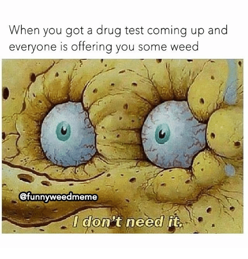 Testes: When you got a drug test coming up and  everyone is offerina you some weed  @funnyweedmeme  I don't need it