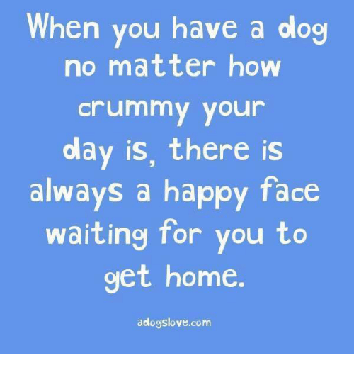 happy faces: When you have a dog  no matter how  Crummy your  olay is, there is  always a happy face  waiting for you to  get home  aologslove.com
