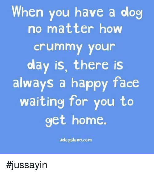 happy faces: When you have a dog  no matter how  Crummy your  olay is, there is  always a happy face  waiting for you to  get home  aologslove.com #jussayin