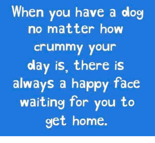 happy faces: When you have a dog  no matter how  Crummy your  olay is, there is  always a happy face  waiting for you to  get home.