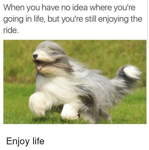 Life, Idea, and You: When you have no idea where you're  going in life, but you're still enjoying the  ride. Enjoy life