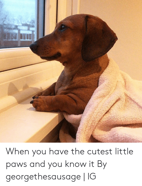 Dank, 🤖, and You: When you have the cutest little paws and you know it  By georgethesausage | IG
