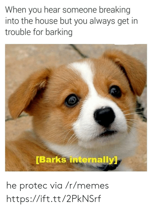 Memes, House, and Via: When you hear someone breaking  into the house but you always get in  trouble for barking  Barks internally he protec via /r/memes https://ift.tt/2PkNSrf