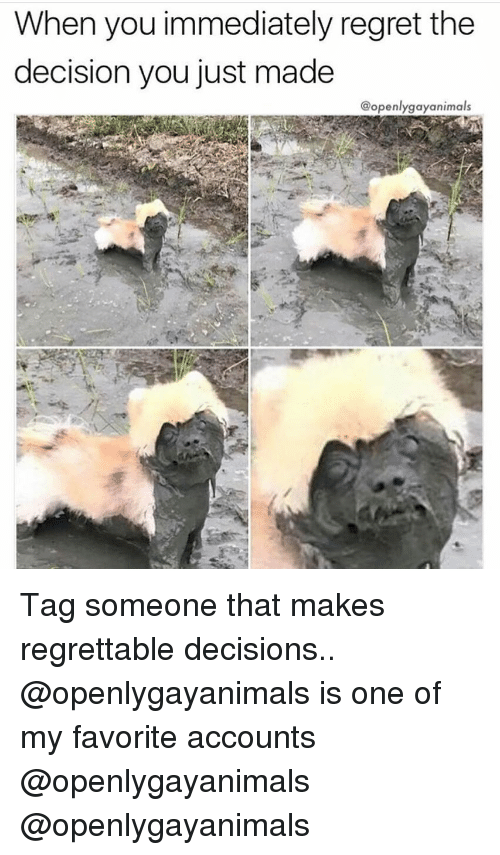 Memes, Regret, and Tag Someone: When you immediately regret the  decision you just made  @openlygayanimals Tag someone that makes regrettable decisions.. @openlygayanimals is one of my favorite accounts @openlygayanimals @openlygayanimals