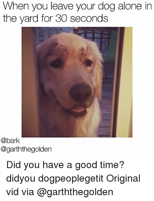 the yards: When you leave your dog alone in  the yard for 30 seconds  @bark  @garththegolden Did you have a good time? didyou dogpeoplegetit Original vid via @garththegolden