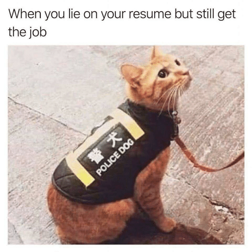 Police, Resume, and Dog: When you lie on your resume but still get  the job  POLICE DOG