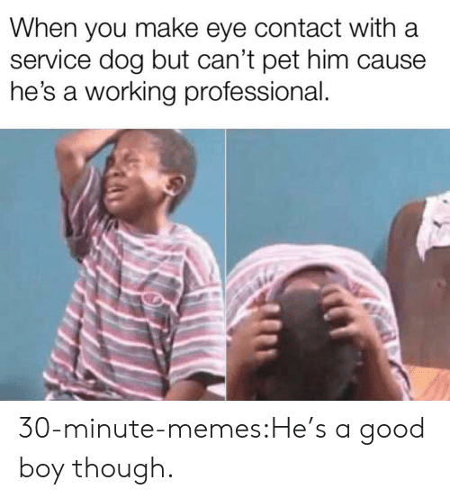 Memes, Target, and Tumblr: When you make eye contact with a  service dog but can't pet him cause  he's a working professional. 30-minute-memes:He's a good boy though.