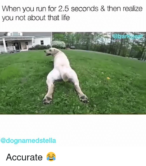 About That Life: When you run for 2.5 seconds & then realize  you not about that life  @dognamedstella Accurate 😂