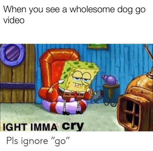 """Video, Dank Memes, and Wholesome: When you see a wholesome dog go  video  IGHT IMMA cry Pls ignore """"go"""""""
