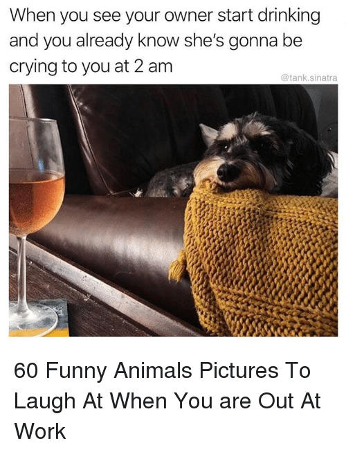 Animals, Crying, and Drinking: When you see your owner start drinking  and you already know she's gonna be  crying to you at 2 am  @tank.sinatra 60 Funny Animals Pictures To Laugh At When You are Out At Work