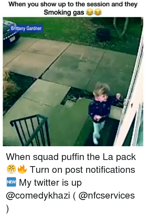 puffin: When you show up to the session and they  smoking ga  Brittany Gardner When squad puffin the La pack 😤🔥 Turn on post notifications🆕 My twitter is up @comedykhazi ( @nfcservices )