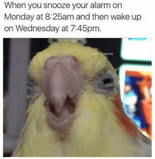 Memes, Alarm, and Wednesday: When you snooze your alarm on  Monday at 8:25am and then wake up  on Wednesday at 7:45pm  rb memes