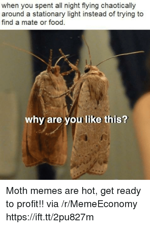 Food, Memes, and Why Are You Like This: when you spent all night flying chaotically  around a stationary light instead of trying to  find a mate or food  why are you like this? Moth memes are hot, get ready to profit!! via /r/MemeEconomy https://ift.tt/2pu827m