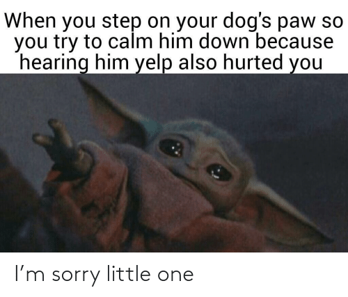 Yelp: When you step on your dog's paw so  you try to calm him down because  hearing him yelp also hurted you I'm sorry little one