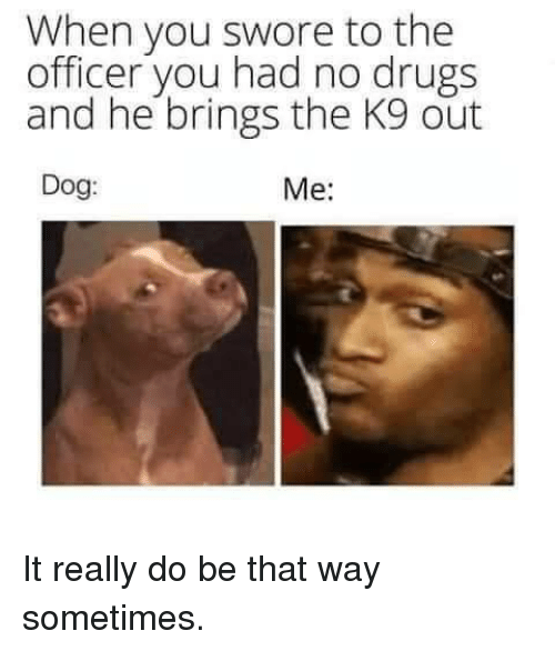 Drugs, Dog, and You: When you swore to the  officer you had no drugs  and he brings the K9 out  Dog:  Me: It really do be that way sometimes.