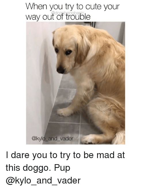 Cute, Memes, and Mad: When you try to cute your  way out of trouble  @kylo_and_vader I dare you to try to be mad at this doggo. Pup @kylo_and_vader