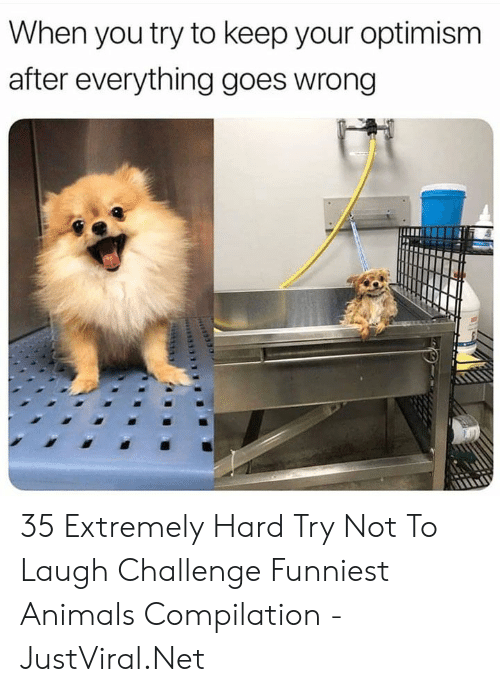 funniest: When you try to keep your optimism  after everything goes wrong 35 Extremely Hard Try Not To Laugh Challenge Funniest Animals Compilation - JustViral.Net