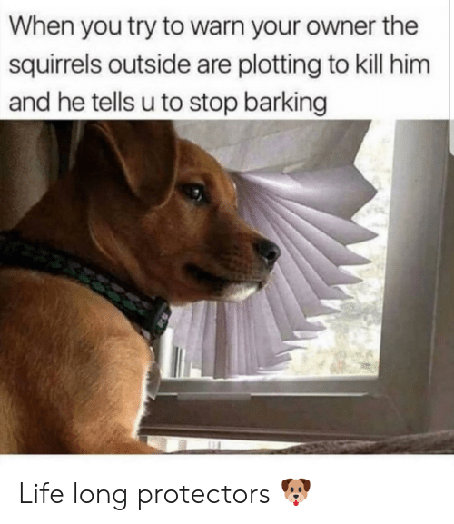 squirrels: When you try to warn your owner the  squirrels outside are plotting to kill him  and he tells u to stop barking Life long protectors 🐶