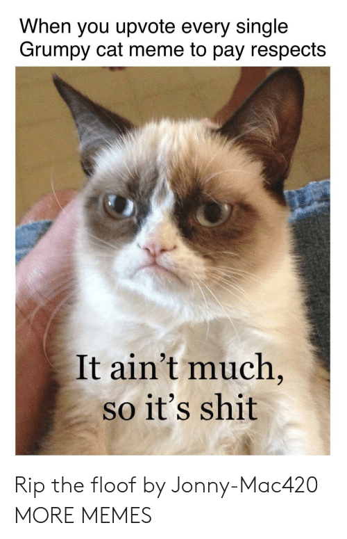 Grumpy Cat: When you upvote every single  Grumpy cat meme to pay respects  It ain't much  so it's shit Rip the floof by Jonny-Mac420 MORE MEMES