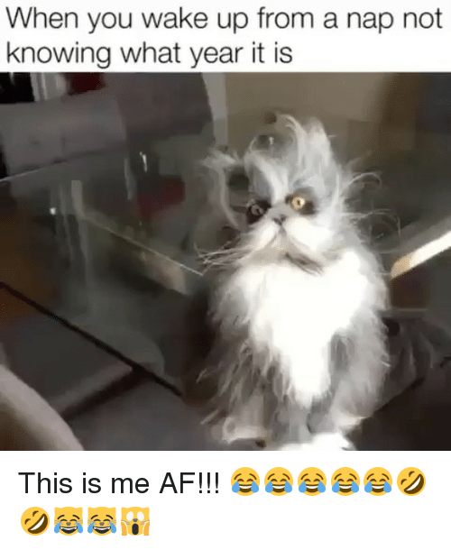 Waking Up From A Nap: When you wake up from a nap not  knowing what year it is This is me AF!!! 😂😂😂😂😂🤣🤣😹😹🙀
